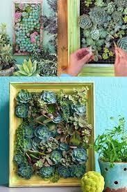100 best succulents and cacti images on pinterest succulents