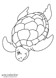 swimming turtle coloring page print color fun
