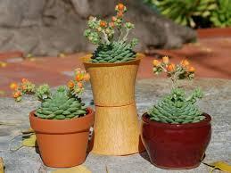 top 5 low maintenance succulents world of succulents