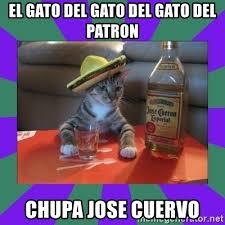 Jose Cuervo Meme - el gato del gato del gato del patron chupa jose cuervo tequila