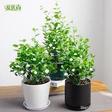 live indoor plants indoor plants for sale live golfocd com