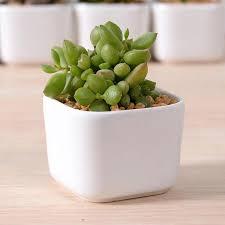 ceramic flower planters u2013 instavite me