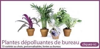 plante d駱olluante bureau plantes depolluantes 550 entreprise environnement
