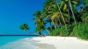 tropical palm beach wallpaper 1920x1080 32278
