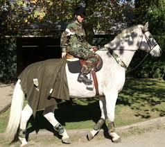 Riding Costumes Halloween 107 Horse Rider Costumes Images Costume
