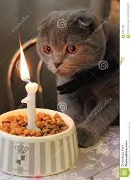 happy birthday stock photo image 63875144
