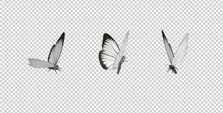 flying butterfly white cabbage by videomagus videohive