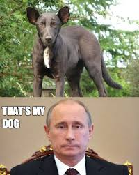 Obama Dog Meme - dog that looks like putin www meme lol com laughing gives you
