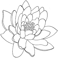 lotus flower tattoo stencil real photo pictures images and