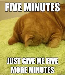 Monday Cat Meme - monday cat memes quickmeme