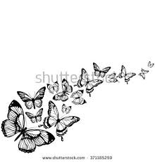 white butterflies flying stock images royalty free images