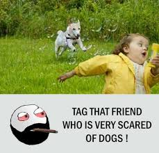 Scared Memes - dopl3r com memes tag that friend who is very scared of dogs