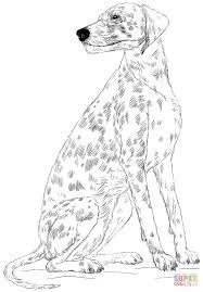 dalmatian dog coloring page free printable coloring pages