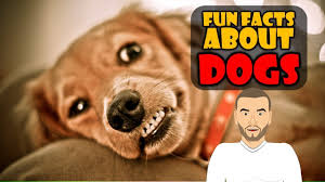 Are All Dogs Colour Blind Do You Love Dogs We Do Check Out Our Top 5 Dog Fun Facts About