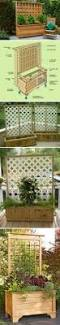 30 diy trellis ideas for your garden 2017