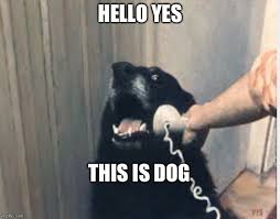 This Is Meme - hello yes this is dog imgflip