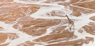 sle resume journalist position in kzn wildlife cing love wild africa photographer and writer scott ramsay