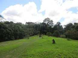 Allpahuayo-Mishana National Reserve