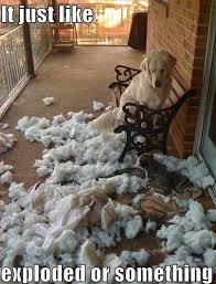 Golden Retriever Meme - 25 reasons golden retrievers are actually the worst dogs to live with