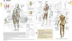 Muscles Used When Bench Pressing What Are The Best Full Body Exercises To Be Done In A Day