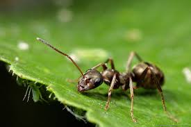 home remedy to kill ants the best way to get rid of ants outdoors