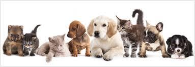 Pet Adopt A Pet City Of Rancho Mirage Rancho Mirage