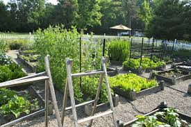 pictures to start vegetable gardening in a raised bed garden