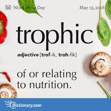 trophic the origin of this word is from the it comes from