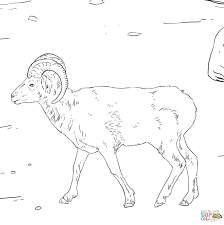 dall u0027s sheep coloring free printable coloring pages