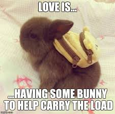 Meme For Love - backpack bunny love imgflip