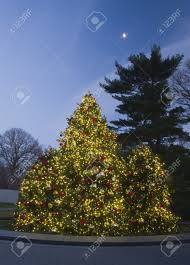 Outdoor Christmas Trees by Outdoor Christmas Tree At Dusk Lit With Bright Colorful Lights