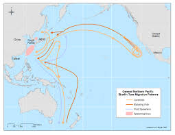 Migration Map Pacific Bluefin Tuna Thunnus Orientalis Swfsc