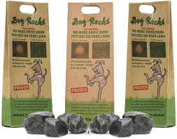 dog urine killing grass dog rocks and other lawn burn solutions