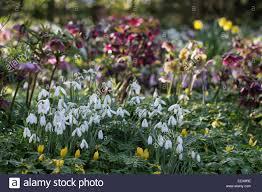 100 spring bulb flowers 5 blue bulbs rodale u0027s organic