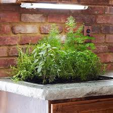 the 25 best indoor plant lights ideas on pinterest low light