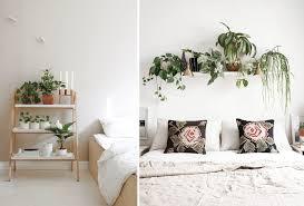 plantes dans la chambre plantes chambre blanc frizbiz