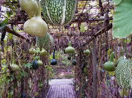 how to make vegetable garden large and beautiful photos photo