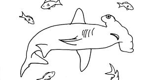 hammerhead shark coloring samantha bell