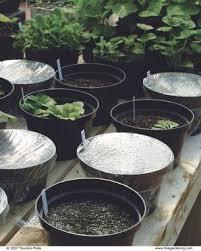 10 seed starting tips finegardening