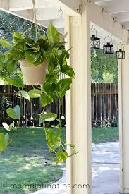 patio planta jpg
