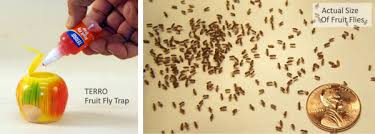 Whats Trending Fruit Flies In Your Kitchen Rolliers Hardware - Small flies in kitchen sink