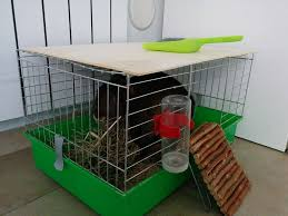 gabbie per conigli nani usate abituare il coniglio a utilizzare la lettiera