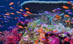 Coral Reefs Of The World Map by Satellites Enable Coral Reef Science Leap From Darwin To Online Nasa