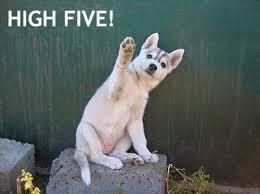 High Five Meme - puppies images high five wallpaper and background photos 14748728