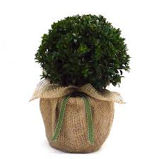 christmas plants for gifts christmas gift ideas
