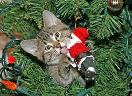 how do i keep my cat out of the christmas tree pet naturals blog