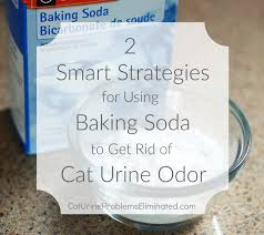 Remove Cat Urine From Sofa Tips On Using Baking Soda For Cat Urine Odor Removal Cat Urine