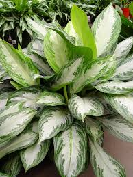 house plants for low light pennlive com