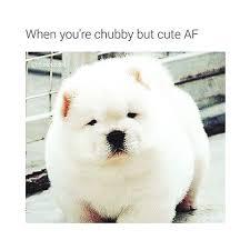 Chubby Meme - david sammon iamtheceo instagram photos and videos
