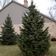 small evergreen decorative trees for landscaping outdoor plants